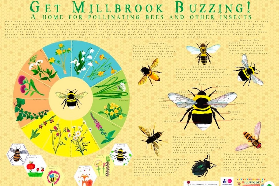 Millbrook Buzzing poster