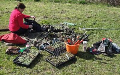 Wildflower Planting