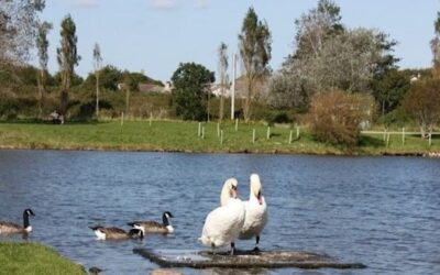 Ducks and swans in Millbrook Lake