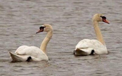 Wildlife guides – nesting and breeding habits