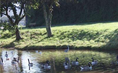 Millbrook Lake